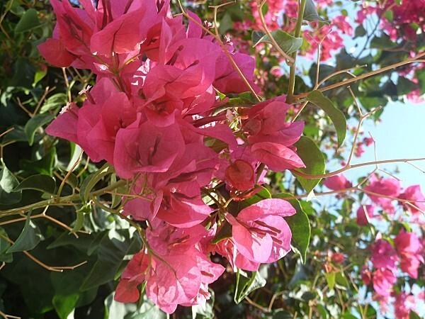 fleurs-rhodes-9.jpg