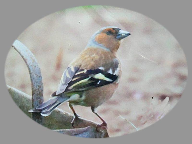 Très peu d'oiseaux dans le jardin