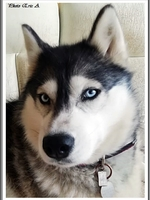 Louska (plus de 4 ans)