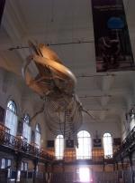 squelette de poisson dinosaure