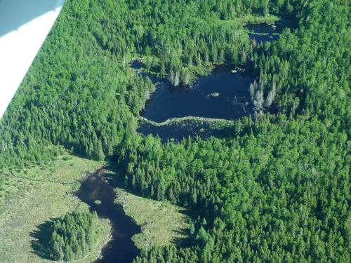CANADA en forêts