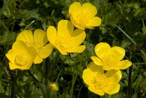 Adieu  jolies fleurs