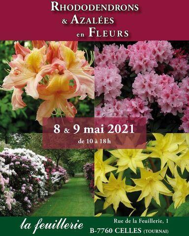 Rhododendrons et azalées en fleurs