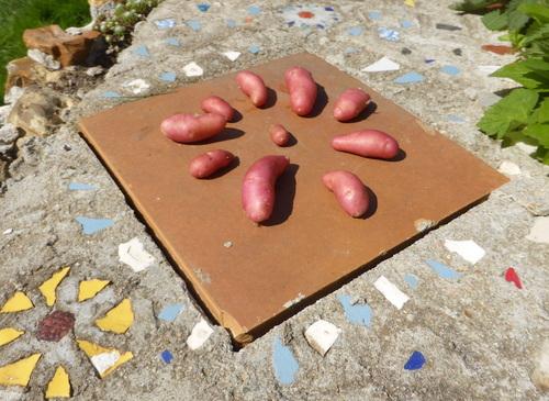 - Petites nouvelles du jardin -