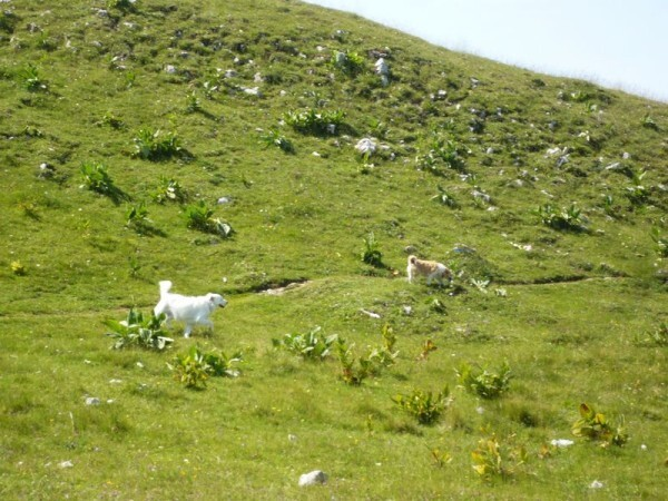 Montee-au-Mont-D-Or03.jpg