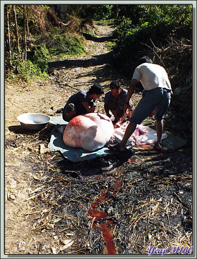 Blog de images-du-pays-des-ours : Images du Pays des Ours (et d'ailleurs ...), Traversée des collines entre Nagarkot et Katmandou: boucherie - Népal