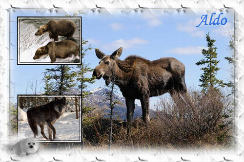 PPS La faune en Alaska