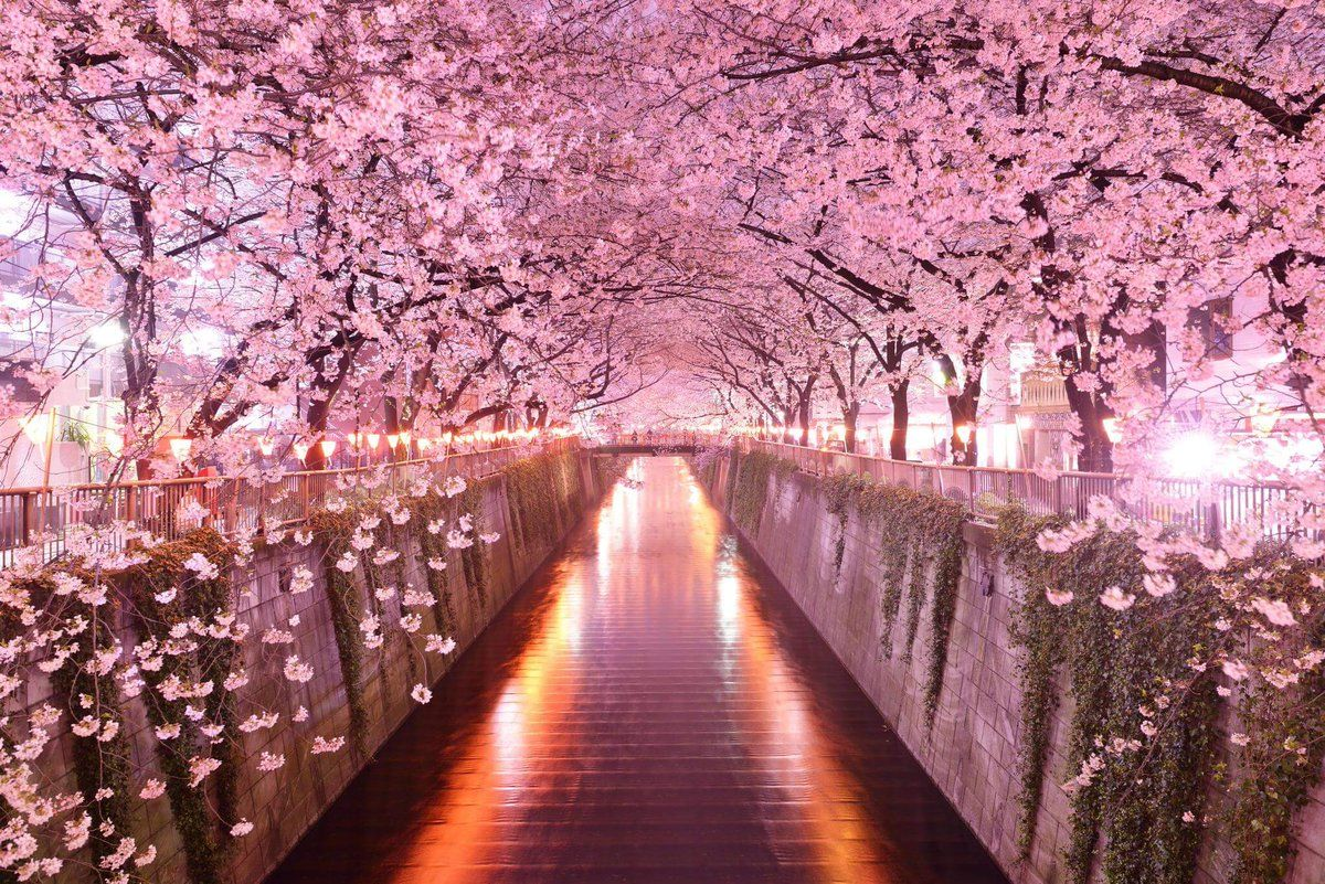 "Japan In Image on Twitter: ""Spring in Japan means sakura or cherry ..."