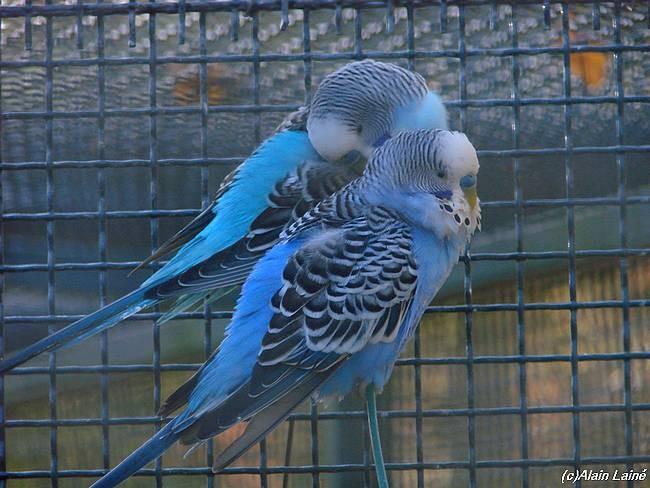 Oiseaux_exotiques_3D_c07___23