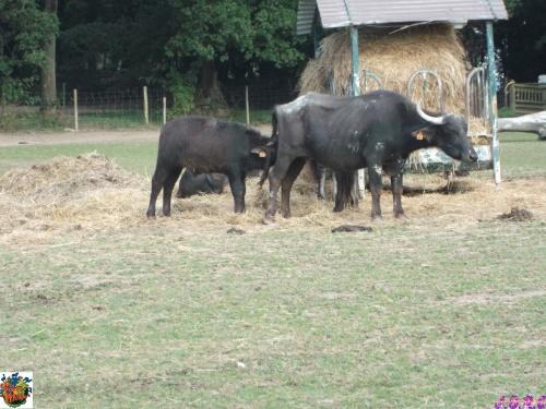 FERME DU MONDE CARENTOIR 56 le parc animalier 3/4
