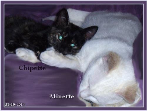 Minette et Chipette