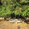 Mali Diarrani Bivouac sous les manguiers