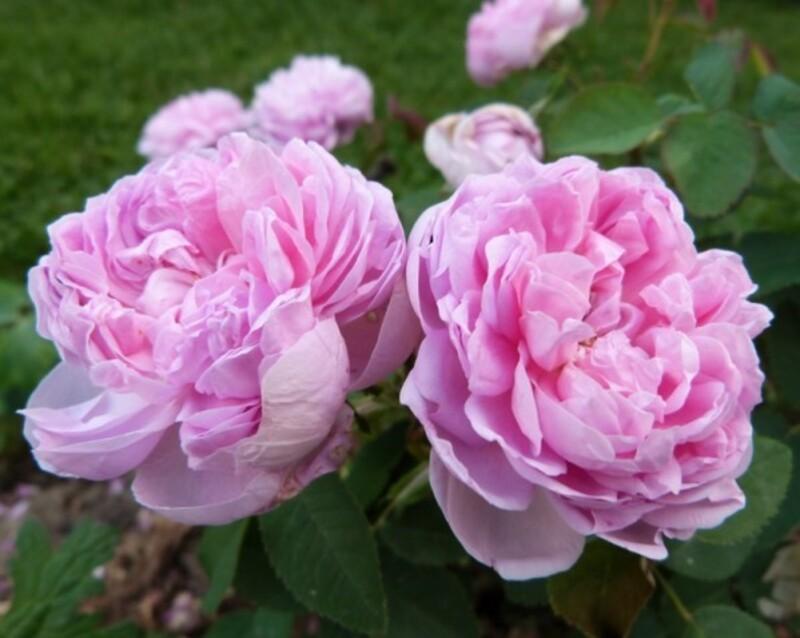 rosier-souppert-et-notting---juin-2014--800x638-.jpg