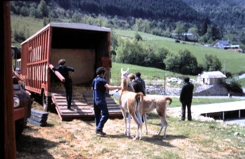 ambiance autour du cirque Jean Richard à Mende en 1971 ( archives Jean Claude Murat)