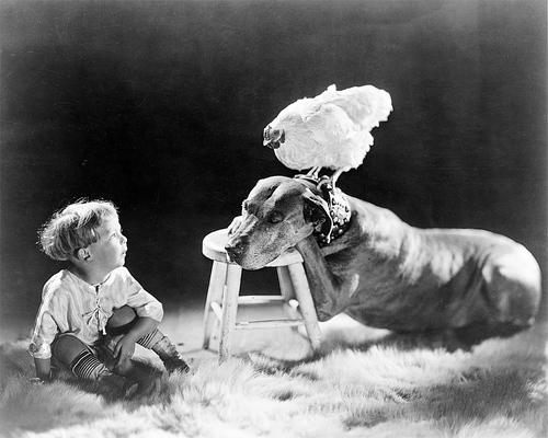 05 - Les poules et les enfants