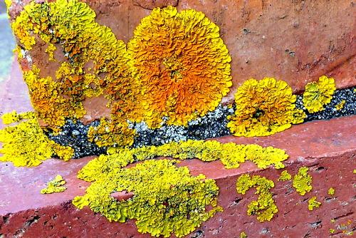 Le lichen sur un mur