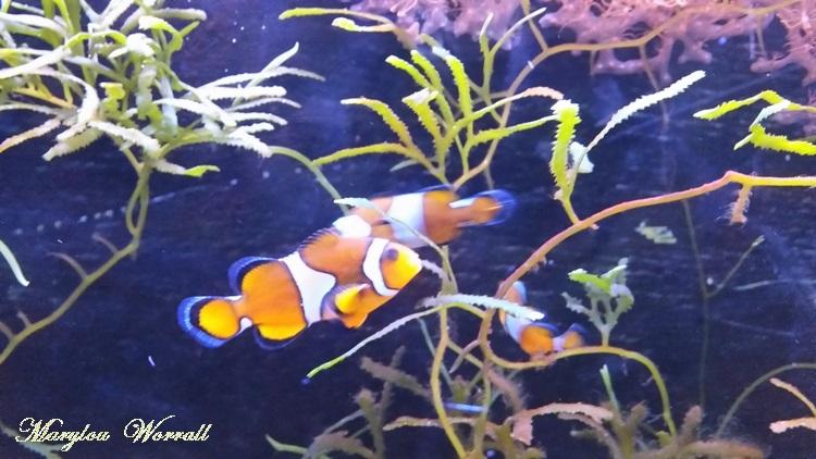 Lyon aquarium 3/: Poissons des mers tropicales
