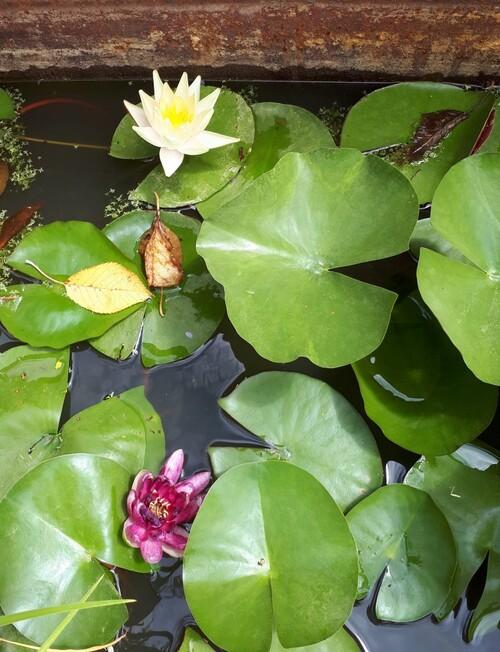 jardin aquatique sans plan d'eau