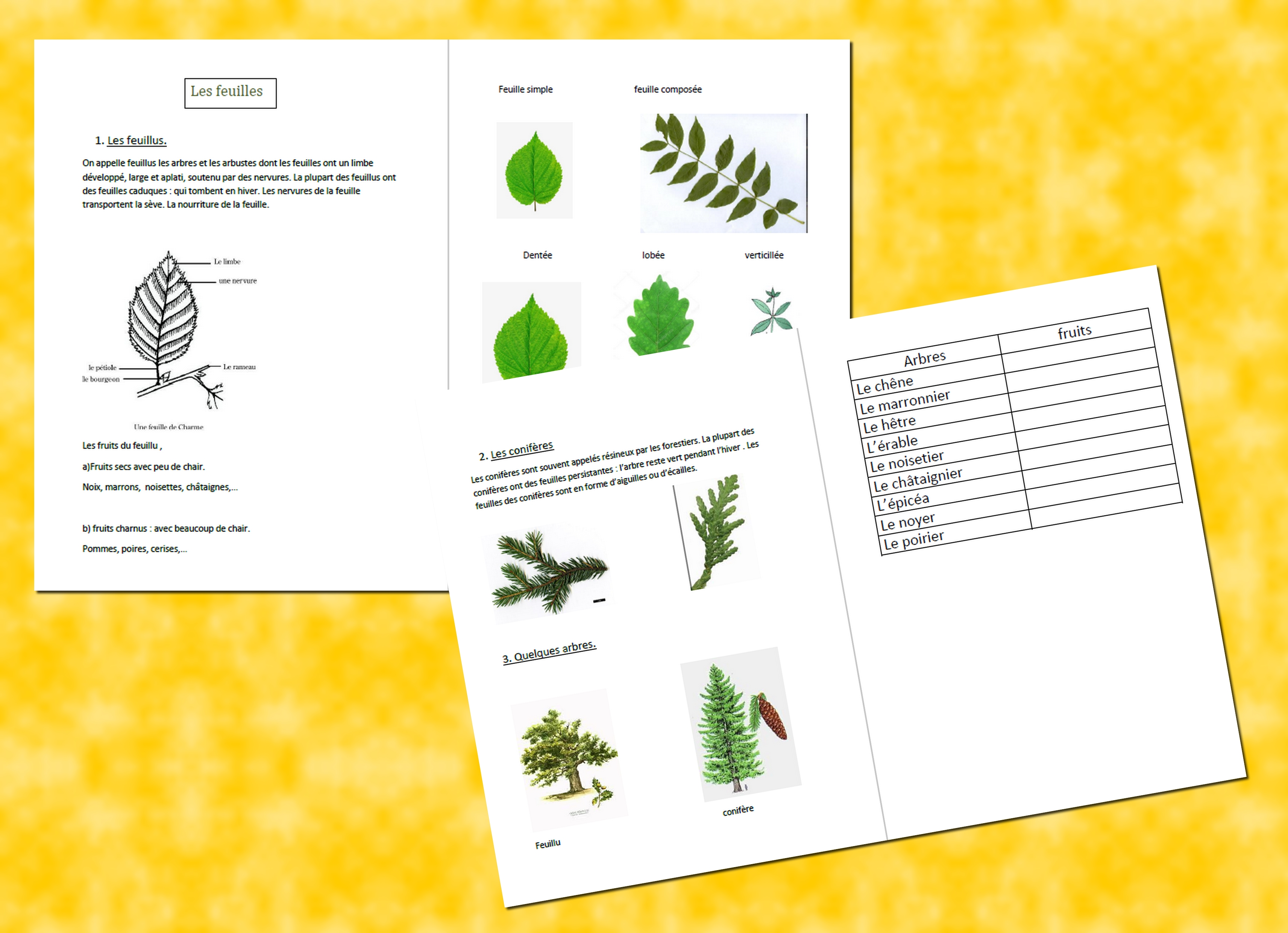 feuilles presentation
