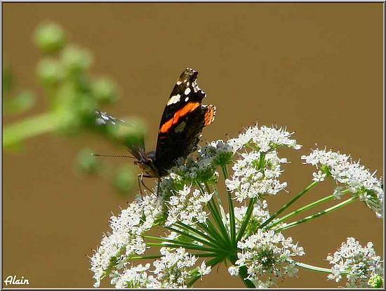 Papillon_Mai07__020