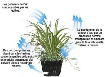Explication utilité d' une plante photo