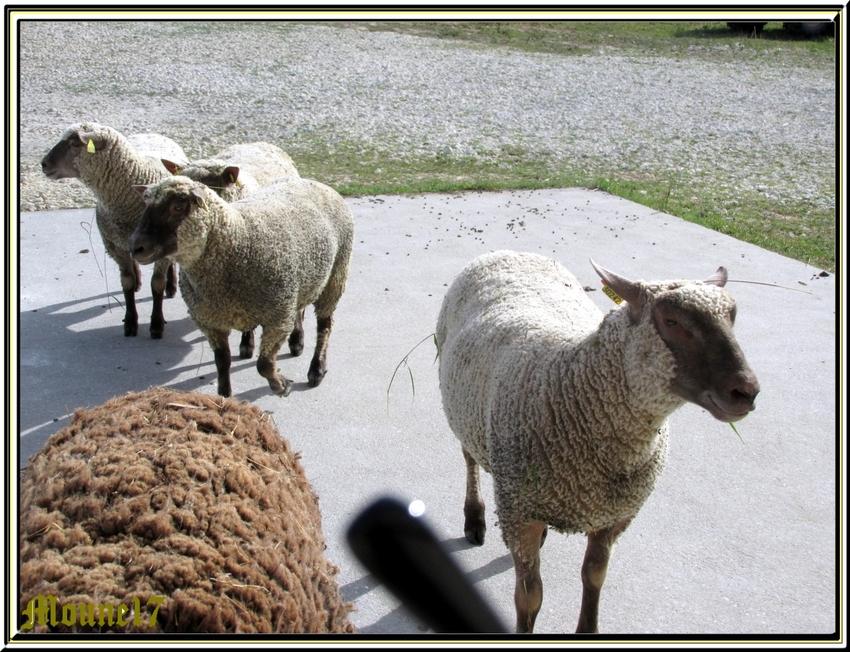 Visite à une ferme