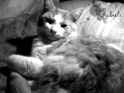 Miaou~ >w<