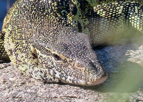 parc naturel Krüger; quelques reptiles