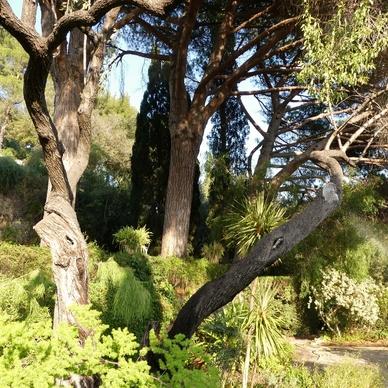 Jardins d'Hyères : le parc Saint Bernard...