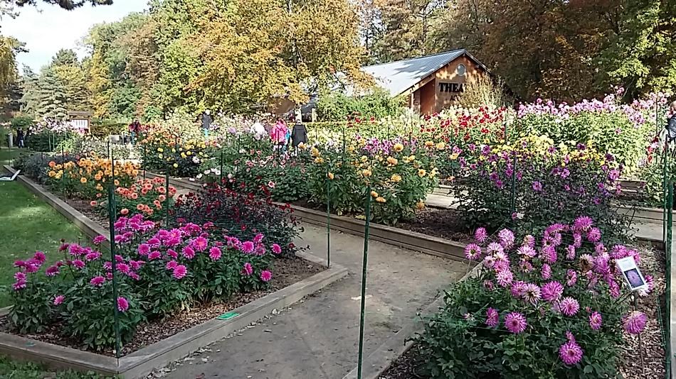 balade au parc floral - les dahlias
