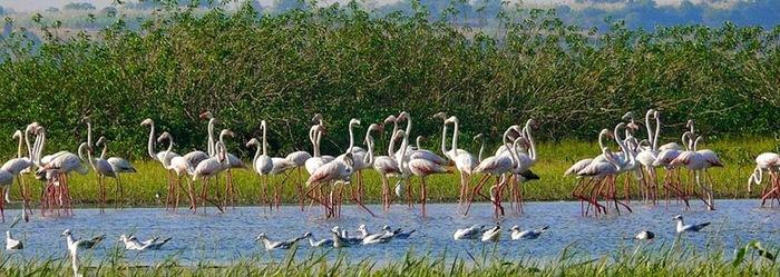 Pour Les Amateurs D'oiseaux -  Un Incontournable -