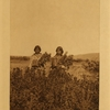18Goldenrod meadows (Piegan)