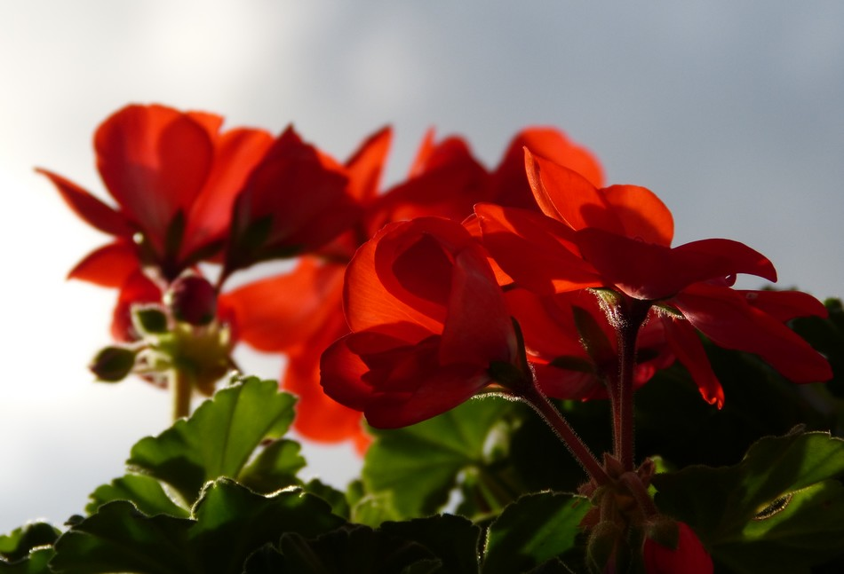 Fleurs et fruits du 31 décembre 2015