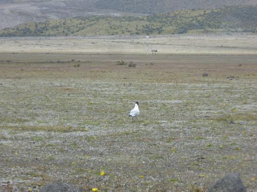 7 ème jour, Volcan Cotopaxi (2)
