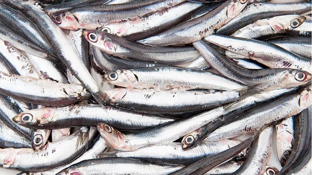 anchois peuvent entrer dans composition du garum