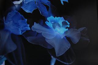 Les fleurs comme jamais vues ...