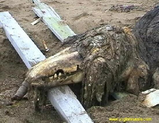 Une créature étrange retrouvée...