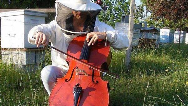 Violoncelliste et... apiculteur !