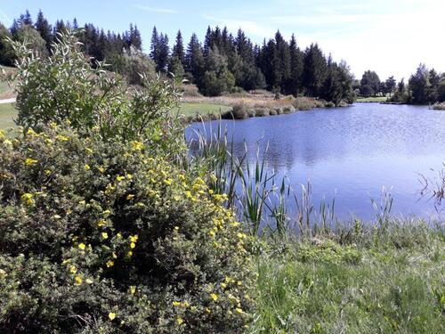 Un petit lac