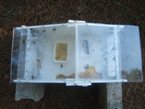 Insect traps in hornet and wasp