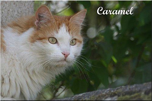 AMI-3731_-caramel-de-sylvie-a-copie-1.jpg