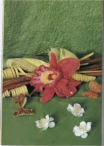 orchidee-rose-photo.jpg