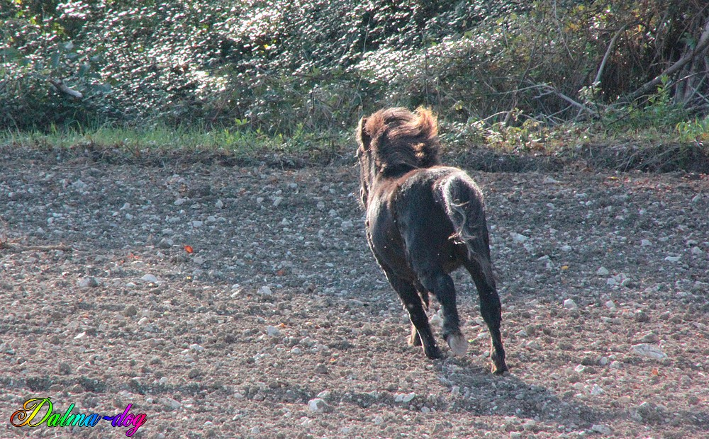 poney en liberté !!!!!
