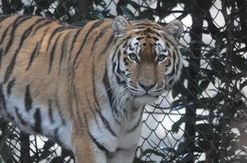 dierenpark emmen d90 214