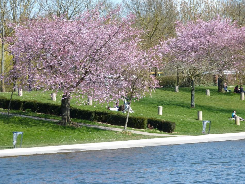 Images insolites du printemps