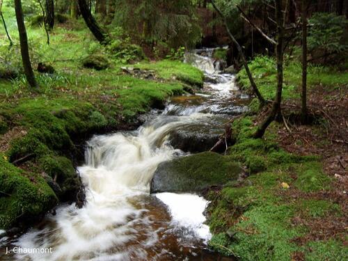 Il y a beaucoup d'eau dans le ruisseau ...