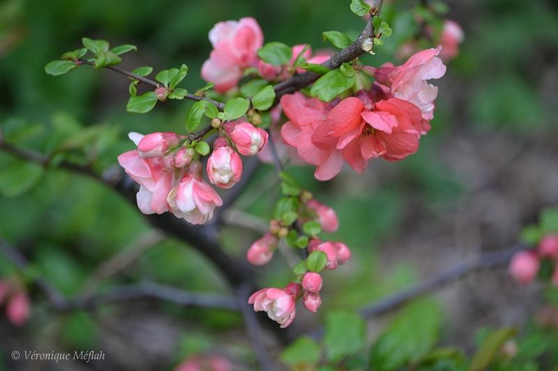 Parc des Buttes Chaumont : Le printemps s'installe ...