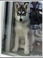 Onaya (presque 3 mois)