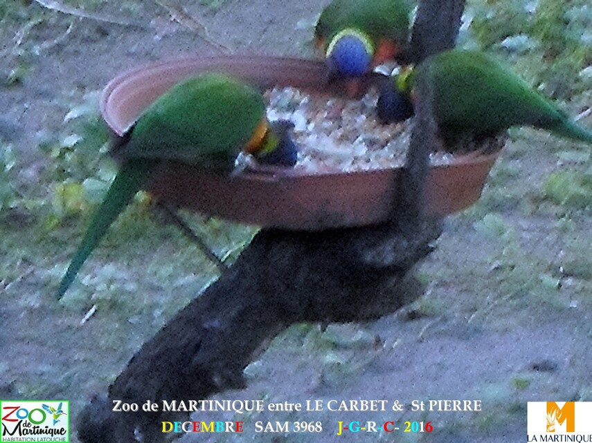 ZOO de MARTINIQUE 5/5 - 15/15  LE CARBET  972      D  25/01/2018