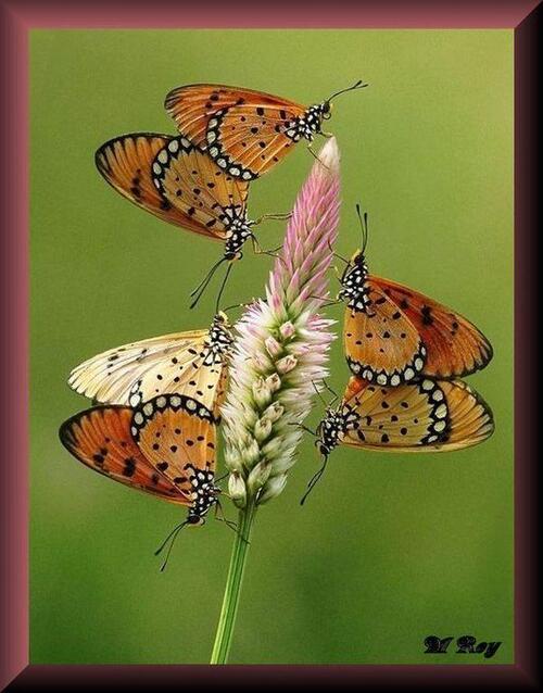 Mes créas Papillons